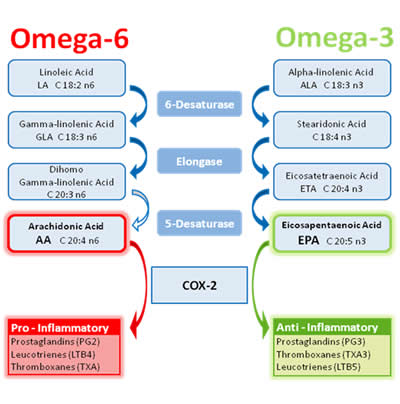 Is there a difference between smoked salmon and frozen for Benefits of fish oil omega 3
