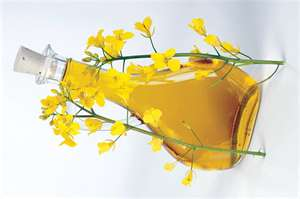 Exactly, What is Canola Oil? (1/6)
