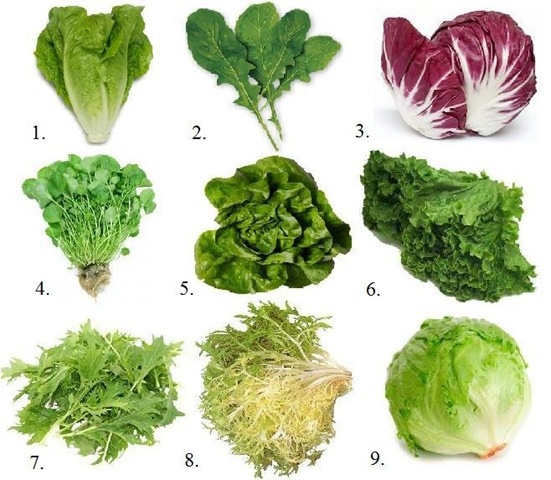 Kale, the King of the Greens – Leafy Green Kale That is (5/6)