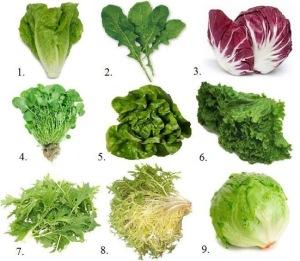 lettucetypes2