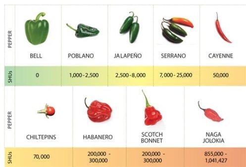 chili-pepper-hot-scale-11