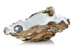 oyster-shell-pearl