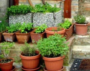 my-little-herb-garden