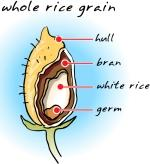 rice_grain