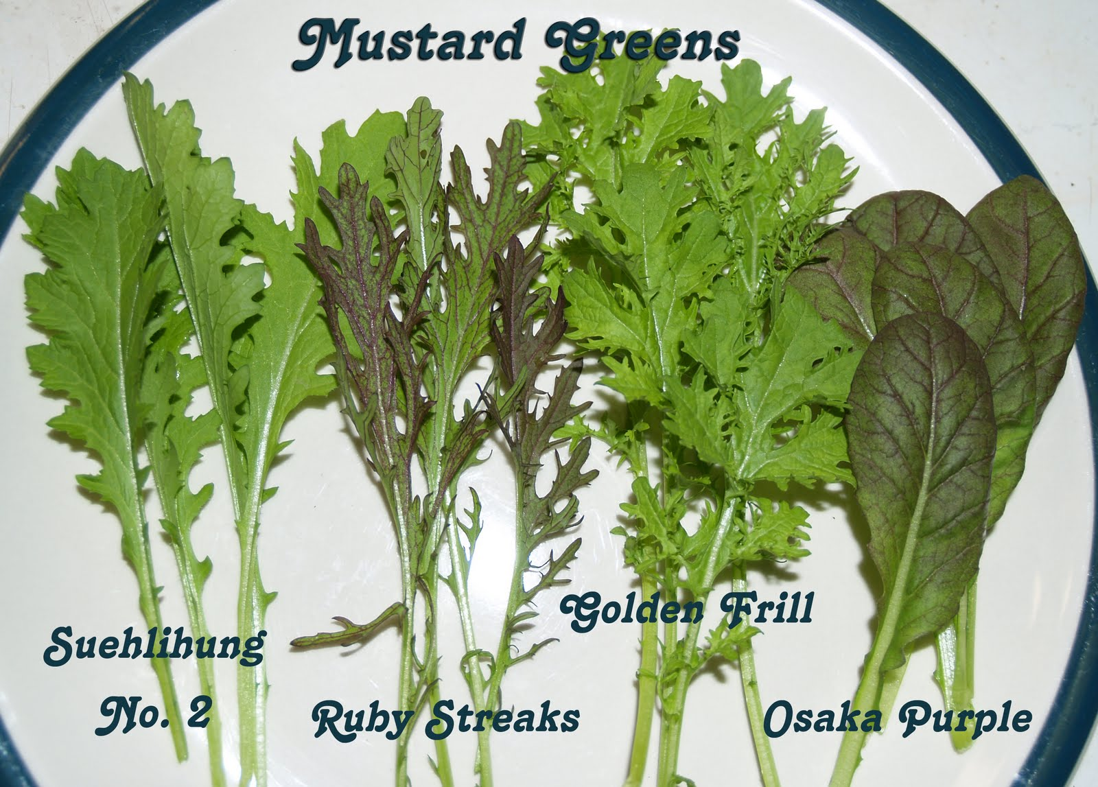 Are Mustard Greens Good For Dogs