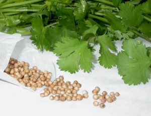 cilantro-with-seeds
