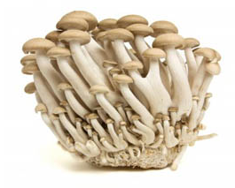 beech_mushrooms_trans