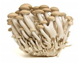 beech_mushrooms_trans