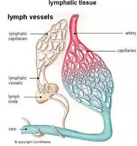 lymph3