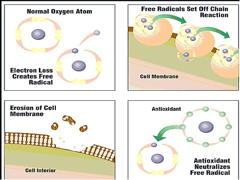 how-antioxidants-fight-free-radicals
