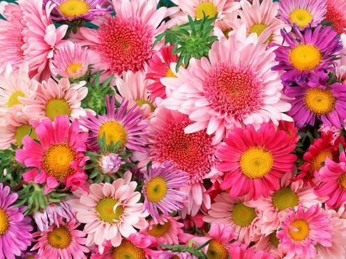 flowers_3bfb31ff_jpg_cf
