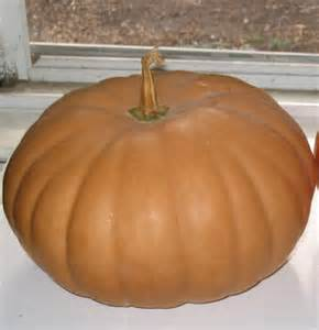 long island cheese pumpkin