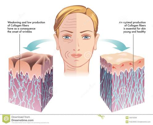 collagen-medical-illustration-role-process-skin-regeneration-35919208