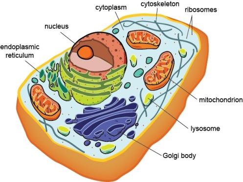 biobook_cells_1