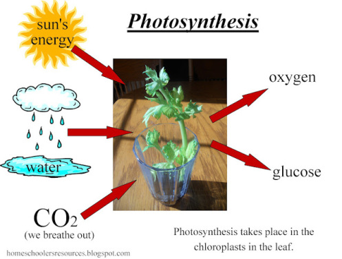 pm-pic-for-photosynthesis