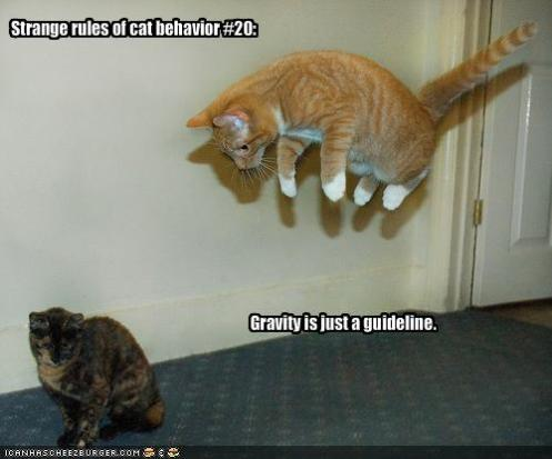 Cool funny cat pictures with captions (1)