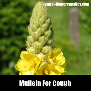 Mullein_cough